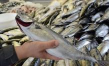 Hangi balık hangi ay yenir ?