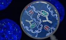 Yeni bir insan hücresi yapısı keşfedildi