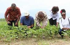 Nazilli'de yerli pamuk türü geliştirildi