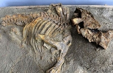 120 milyon yıllık dinozor fosili bulundu
