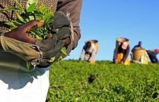 Afrika'yı bekleyen yeni tehlike: Tarım emperyalizmi