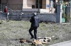 Yine Ankara yine zehirlenen köpekler
