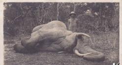Batı'nın Afrika'daki hayvan vahşeti