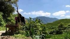Doğu Türkistan'da biber hasat mevsimi