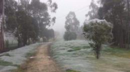 Avustralya'yı örümcekler sardı