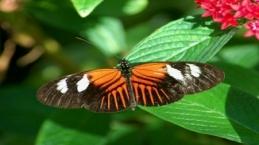 Kelebeklerin doğayla dansı
