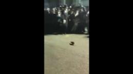 Yahudilerin fare karşısındaki inanılmaz korkusu