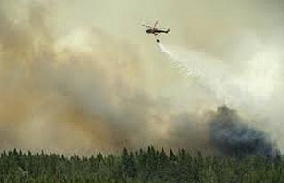 İsveç'te aşırı sıcaklar orman yangınları...