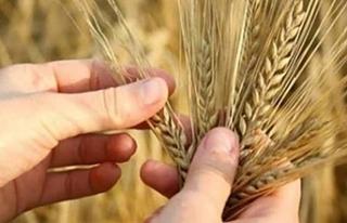 Kanada S.Arabistan'a arpa ve buğday satamayacak