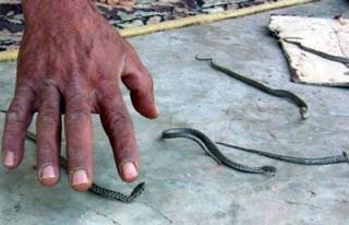 25 yıldır yılanlı evde yaşıyorlar