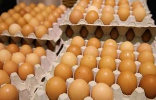 Zehirli yumurta krizinin Belçika'ya maliyeti açıklandı