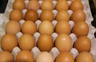 Avrupa'daki zehirli yumurta krizi Güney Kore'ye de...