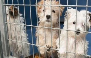 Hayvan satışına yasak talebi