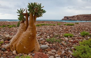 Yemen-BAE arasında Sokotra adası gerginliği