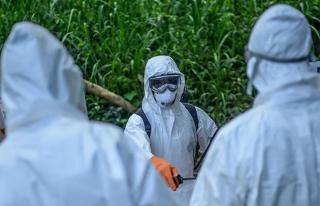 Kongo bir kez daha Ebola tehdidiyle karşı karşıya