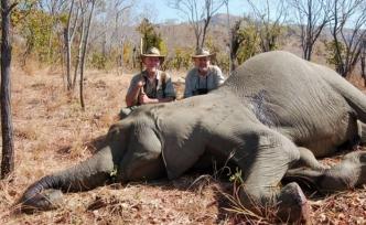 Hayvan ırkının yüzde 60'ını yok ettik