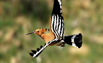 Tasavvuf kültüründe kuş