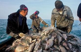 Aral Gölü'nde yeniden hayat canlanıyor