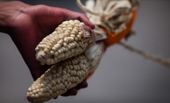 Monsanto'ya milyonlarca dolar ceza