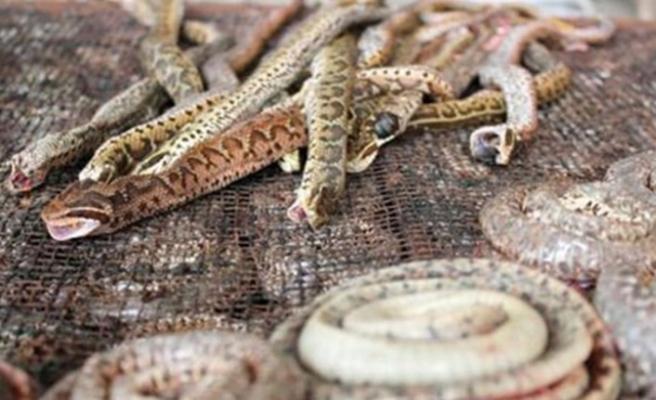 Sel sularının çekildiği Kerala'da yılan alarmı