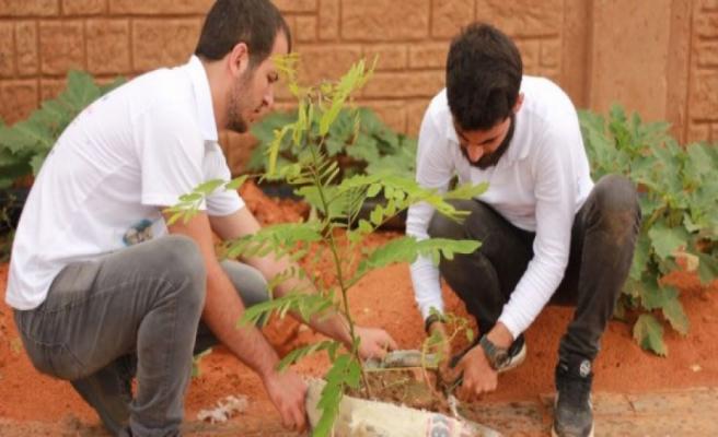 TİKA gönüllüleri Nijer'de fidanlar yetiştiriyor