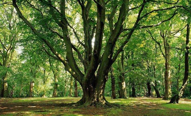 127 bin 560 ağaç kağıt için kesilmekten kurtuldu