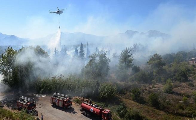 Aydın'da ormanlık alanda yangın