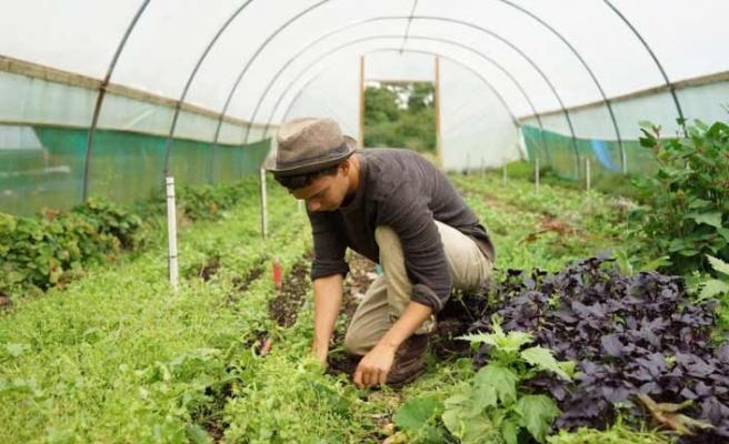 İngiltere mevsimlik işçi alacak