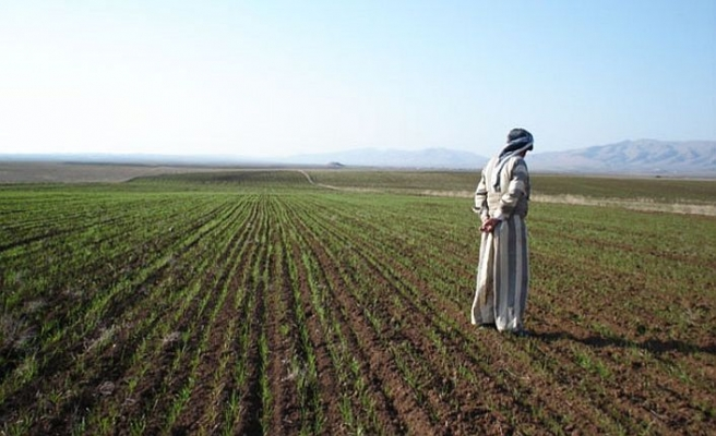 Susuzluk Irak'ta tarım arazilerini daralttı