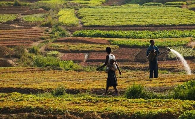 Afrika'nın tarım potansiyeli ve küresel rekabet karşısında Türkiye