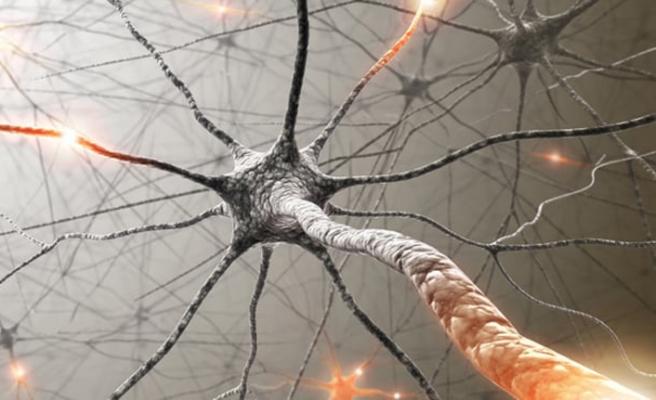 Bağırsaklara niçin 2. beyin deniliyor?