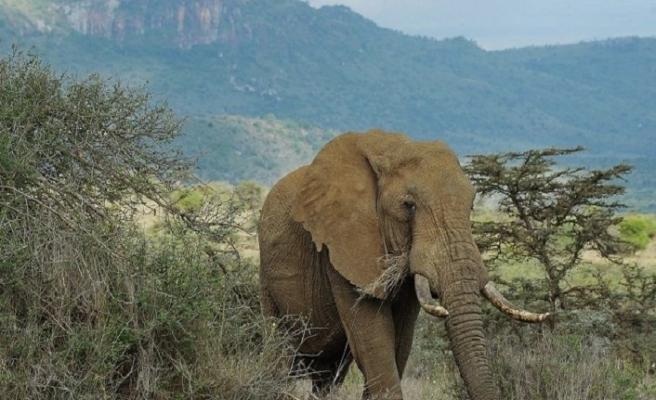 Filler 19 avcıyı öldürdü