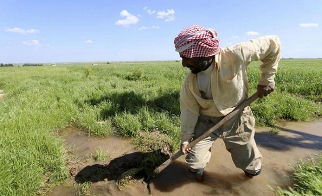 İç savaş ve kuraklık Suriye tarımını vurdu