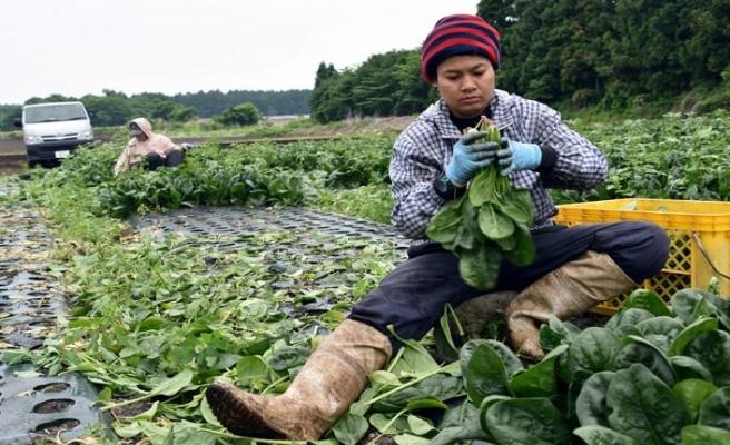 Japonya mavi yakalı işçi göç alımına hazırlanıyor