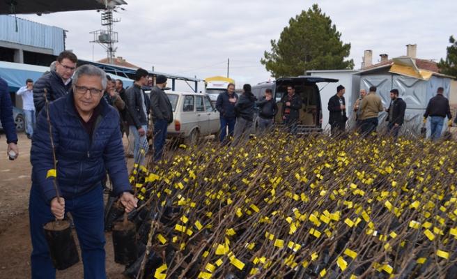Çiftçilere 5 bin fidan dağıtıldı