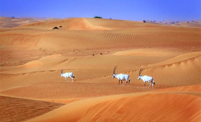Dubai'nin vahşi tarafı görenleri büyülüyor