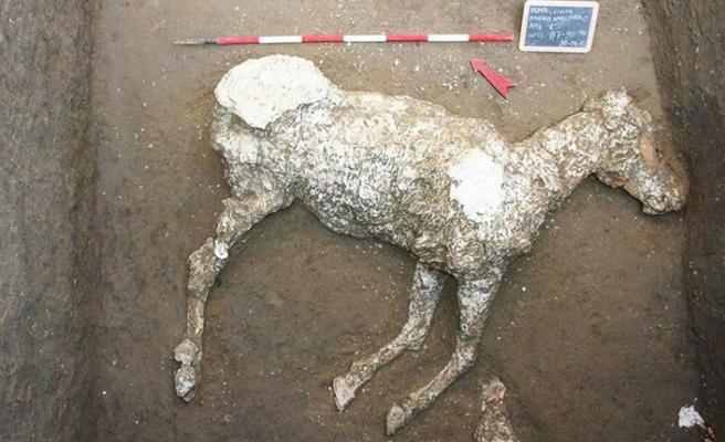 Pompeiide taşlaşmış at kalıntıları bulundu 98