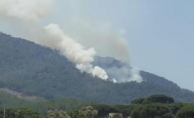 Milas ormanları yanıyor