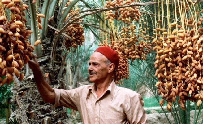Tunus- AB serbest ticaret anlaşması çiftçileri tedirgin etti
