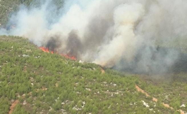 Bodrum'un Kızılçam ormanları yanıyor