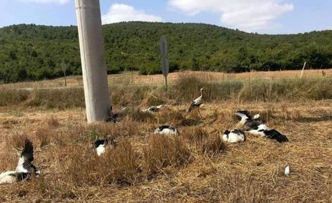 Tekirdağ-Süleymanpaşa'da leyleklerin toplu ölümüne çare aranıyor