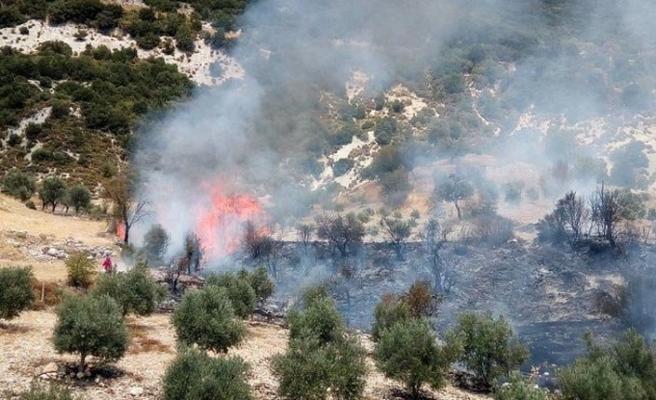 Antalya Kaş'da orman yangını