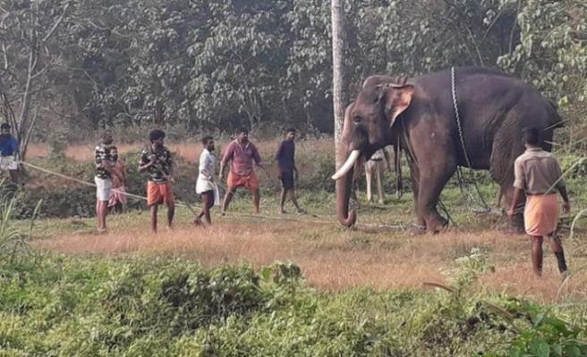 Hindistan'da fil saldırısı: 1 ölü