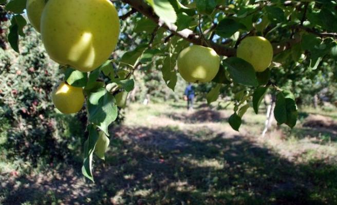 Ağrı'da 60 bin meyve ağacı toprakla buluşacak