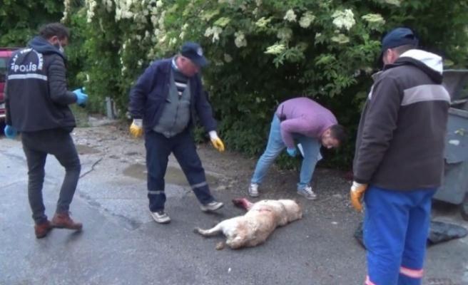 Kütahya'da insan dehşeti.. sokak köpeğini silahla vurdular
