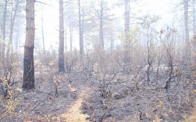İstanbul Çekmeköy'de 15 dönüm orman yandı