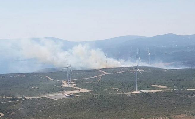 İzmir'in Seferihisar ilçesinde makilik alanda yangın çıktı