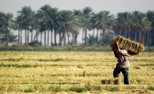Çölde tarıma sudan bahane
