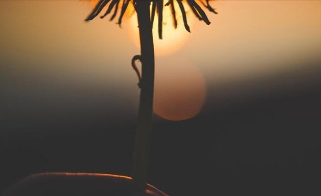 Myanmar'da 100 milyon yıl öncesine ait yeni bir çiçek türü keşfedildi
