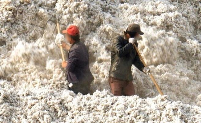 Washington Post Çin'de pamuk tarlalarında zorla çalıştırılan Uygur Türklerini yazdı